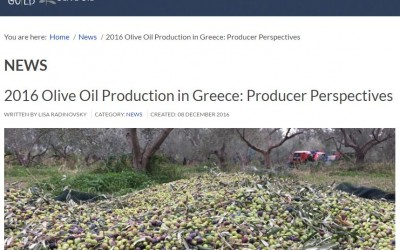 """greekliquidgold.com: """"2016 Olive Oil Production in Greece: Producer Perspectives"""""""