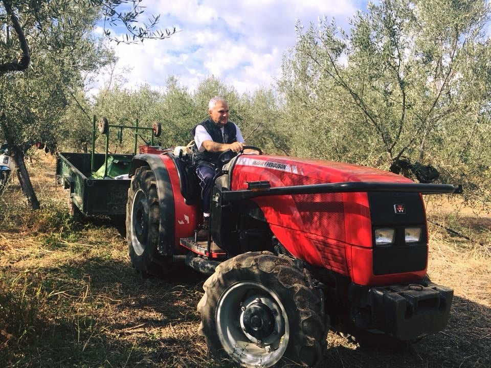 "oliveoiltimes.com: ""Greek Producers Report Poor Harvest for Quantity, Quality"""