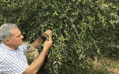 "oliveoiltimes.com: ""Mounting Concerns in Greece as Harvest Nears"""